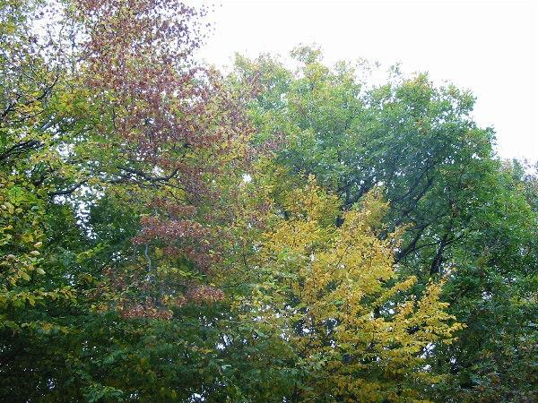 La Forêt de Montargis par un soir d'automne