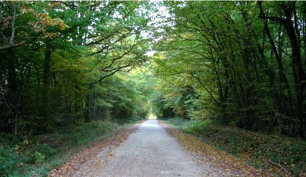 Forêt de Montargis - Entrée de la route forestière de la Pierre du Gros Vilain par un soir d`automne