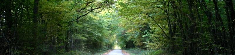 Forêt de Montargis - Route forestière de la Pierre du Gros Vilain