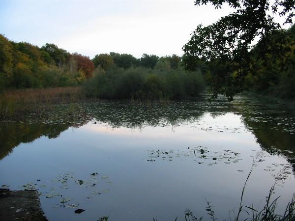 Forêt de Montargis - L'Etang de Paucourt à la tombée de la nuit, un soir d'automne