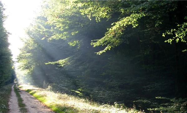 Forêt de Montargis - Lever de soleil sur la route forestière de Maltaverne - Une explosion de lumière ! Cliquez sur la photo pour l'agrandir.