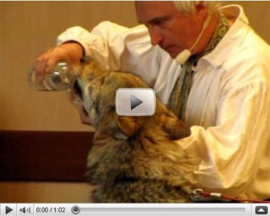 Un extrait du spectacle des loups. Cliquez ici pour visualiser la vidéo. Montez le son !