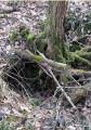 """Lien direct vers ma page """" Forêt de Montargis - Le Puits à Rippault """""""