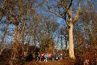 Passage au pied d'un superbe chêne. Cliquez sur cette photo pour l'agrandir et / ou lancer le diaporama.